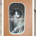 Slide - chocowinity-pet-resort-cats
