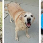 Slide - chocowinity-pet-resort-dogs